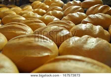 Bread. Bakery. Bakery plant. Production of bread. Fresh white bread from the oven