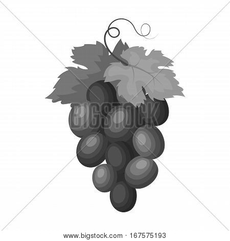 Bunch of wine grapes icon in monochrome design isolated on white background. Spain country symbol stock vector illustration.