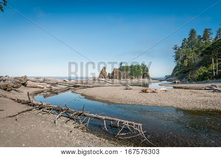 driftwood in Ruby Beach of Olympic National Park Washington State USA