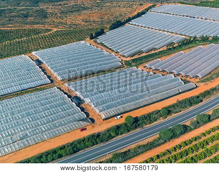Aerial View Fruit And Orange Trees Plantation