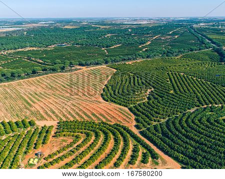 photo of Aerial View Orange Trees Plantation Spain