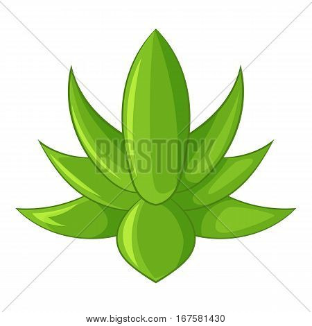 Big agave icon. Cartoon illustration of big agave vector icon for web