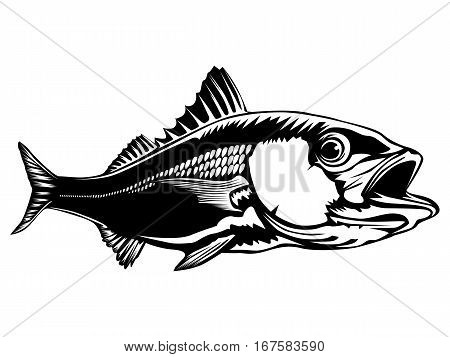 Red Snapper Isolated