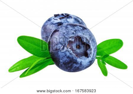 Blueberries isolated on white background. Two blueberry with clipping path