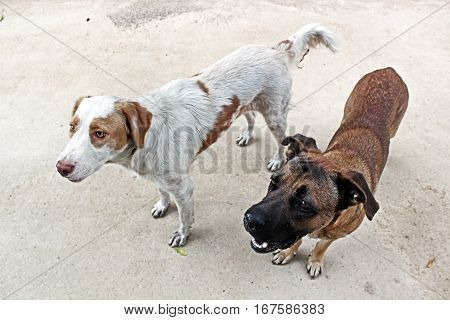 Two stray dogs in the street in Italy.
