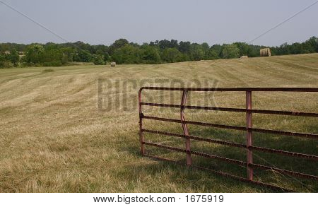 The Hay Field
