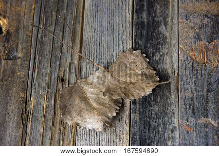 pair of dried brittle heart shaped leaf on weathered wood