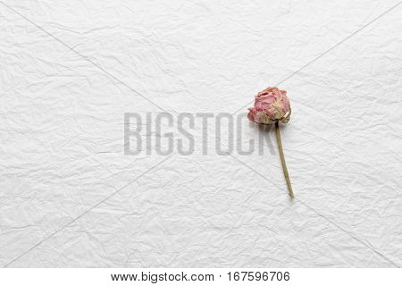 dried buds of roses on a white background
