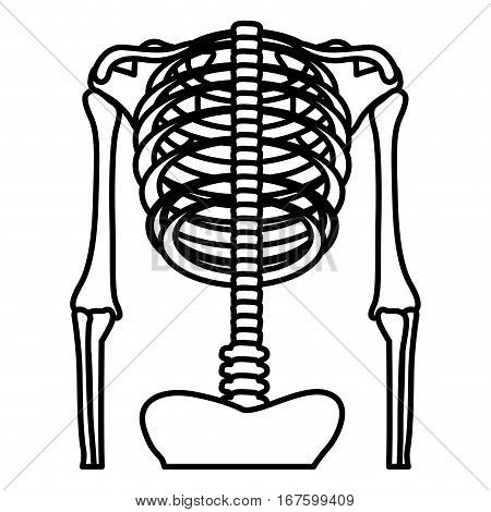 monochrome silhouette with half body with system bones and vertebrae vector illustration