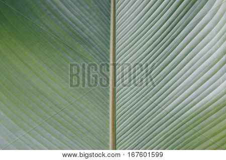 The leaf texture nature green for background