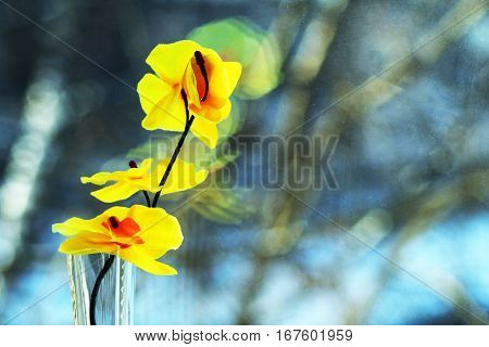 yellow orchids on the window, beautiful flower
