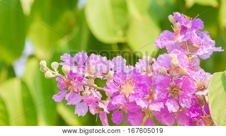 branch of beautyful pink flowers on tree