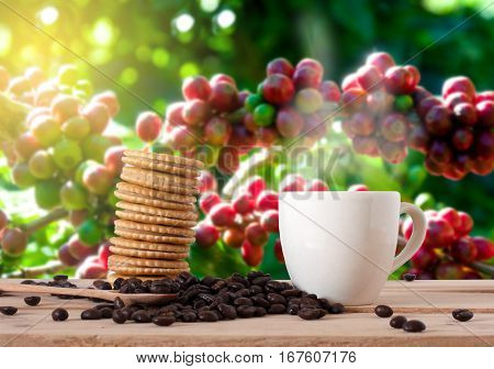 The Coffee Beans And Cup Of Coffee With Cracker On Wooden Table In Coffee Garden . Coffee Break