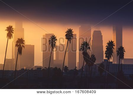 Downtown Los Angeles skyline in foggy morning sunlight. Palm tree in front, skyscrapers in background. Background image. California theme.