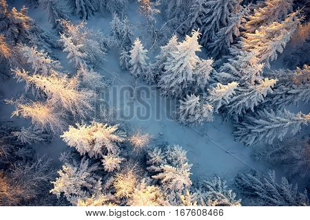 Top view to wood from bird's eye. Amazing winter scene. Christmas theme. Winter background