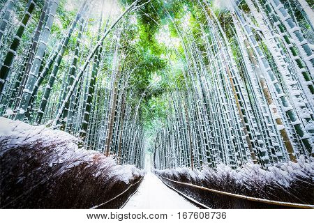 The walking paths and the bamboo groves with snow fall at Arashiyama touristy district Kyoto prefecture