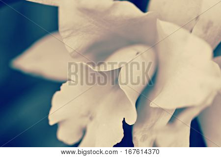 Closeup earth tones beautiful flower and soft focus background