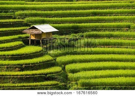 Terraced Rice Field In Mu Cang Chai, Vietnam