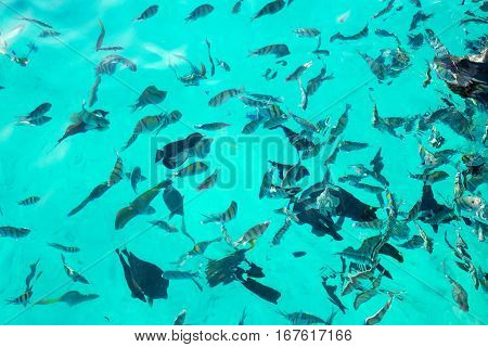 Variety tropical fish. Underwater world. Top view.