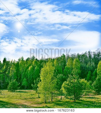 Landscape with the bright green trees and blue sky.