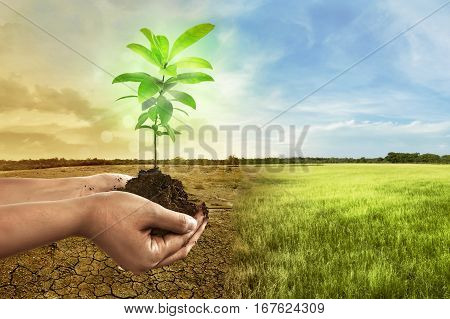 Hand Holding Plant On Soil In Over Cracked Earth