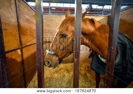 Bay horse covered with a blanket in a stable