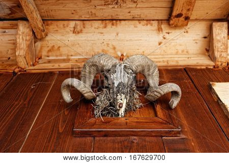 Animal head trophy mounted over wooden wall