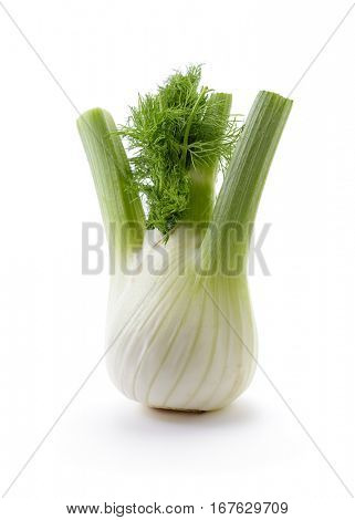 Fennel Bulb. Single fresh fennel bulb with leaves on white background.