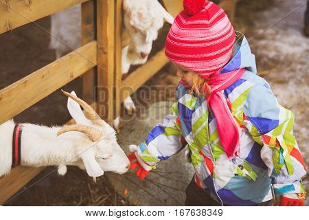 little girl feeding goat at farm or zoo