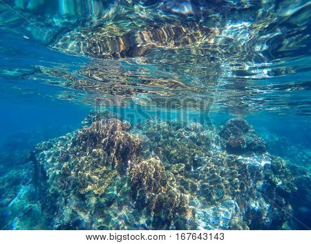 Coral reef close to surface of sea during low tide. Fragile ecosystem of ocean with coral and sea plant. Seashore wildlife. Grey corals in blue water. Underwater landscape of tropical sea close photo