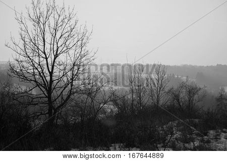 Winter Countryside Panorama Wit Tree Silhouette In Sunset