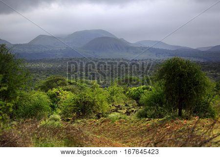 Park Tsavo East National - salah satu yang tertua dan taman negara terbesar di Kenya