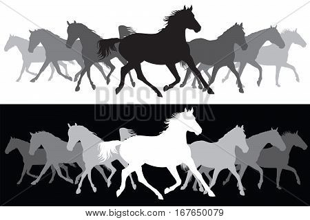 Set of Trotting black and white horses silhouette on white and black background vector illustration