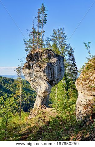 Forest with big rock Budzogan in Slovakia