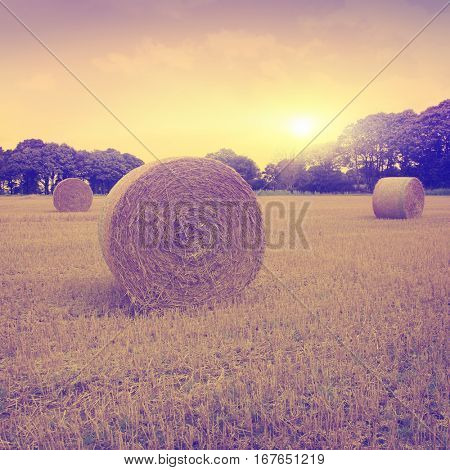 Vintage photo of agricultural field with hay bales at sunset.