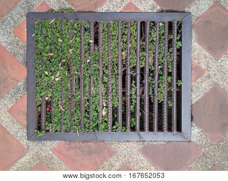 Steel grating Drainage street sewers have a small tree climber to stop the water flow