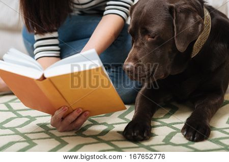 Intelligent boy. Joyful caring elegant mistress showing her pet a cute illustration while having time sitting with him on a carpet at home