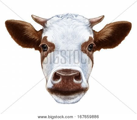Portrait of Cow. Hand drawn illustration. Domestic animal.