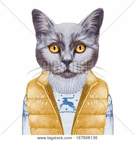 Animals as a human. Portrait of British Shorthair Cat in down vest and sweater. Hand-drawn illustration, digitally colored.