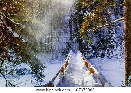 Snowbound bridge over the frozen creek in the spruce forests of the Carpathian.