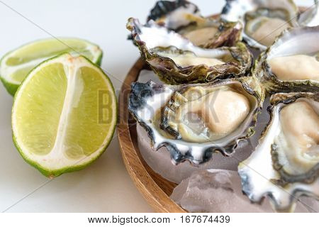 Freshly shucked Sydney Rock Oyster, fresh seafood