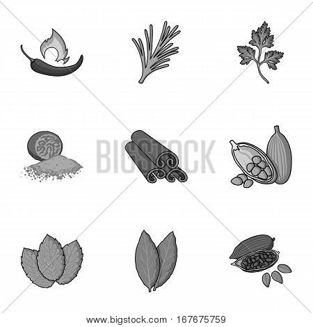 Herb and spices set icons in monochrome style. Big collection of herb and spices vector symbol stock