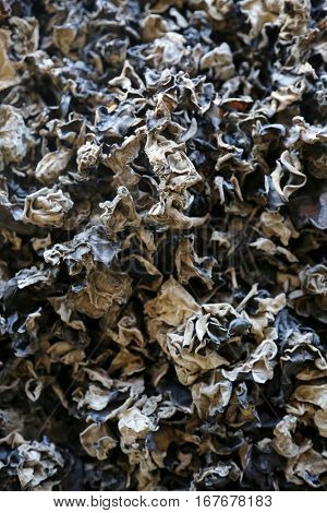 Dried black mushrooms aka Black Fungus for sale in a Chinese Medical Herb Store