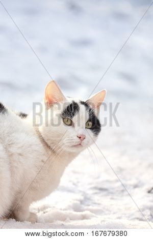 Domestic cat sitting in snow. Plenty of copy space