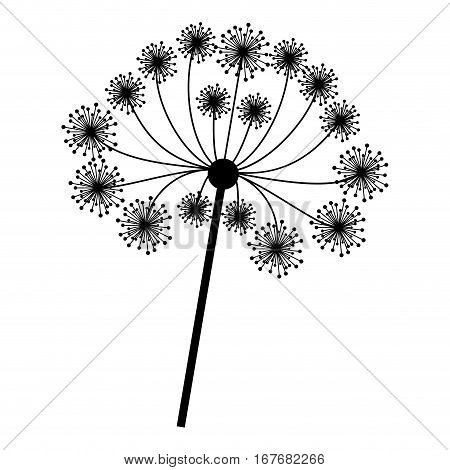 silhouette dandelion with stem and pistil closeup vector illustration . Vector illustration