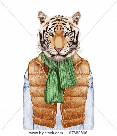Animals as a human. Tiger in down vest, sweater and scarf. Hand-drawn illustration, digitally colored.