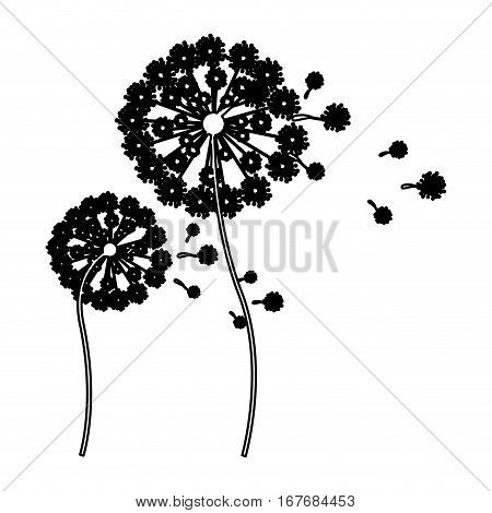 black silhouette dandelion with stem and pistil and fly petals vector illustration