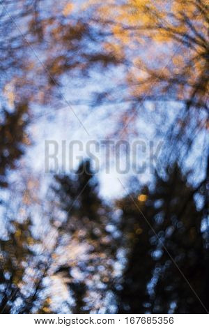 Autumn forest look up into the treetops abstract background