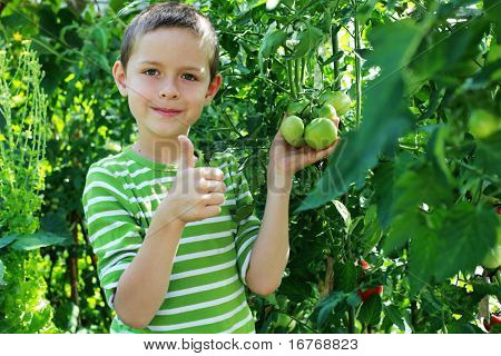 8 years old boy with tomatoes  in vegetable garden - kids