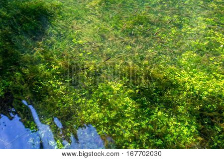 Beautiful underwater world of the Mirror lake in the Natural park of Monasterio de Piedra in Nuevalos, Zaragoza, Spain